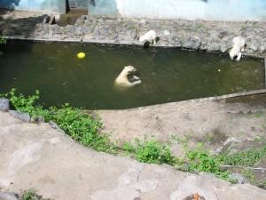 A na závěr malý zákusek v bazénu, dobrá ryba